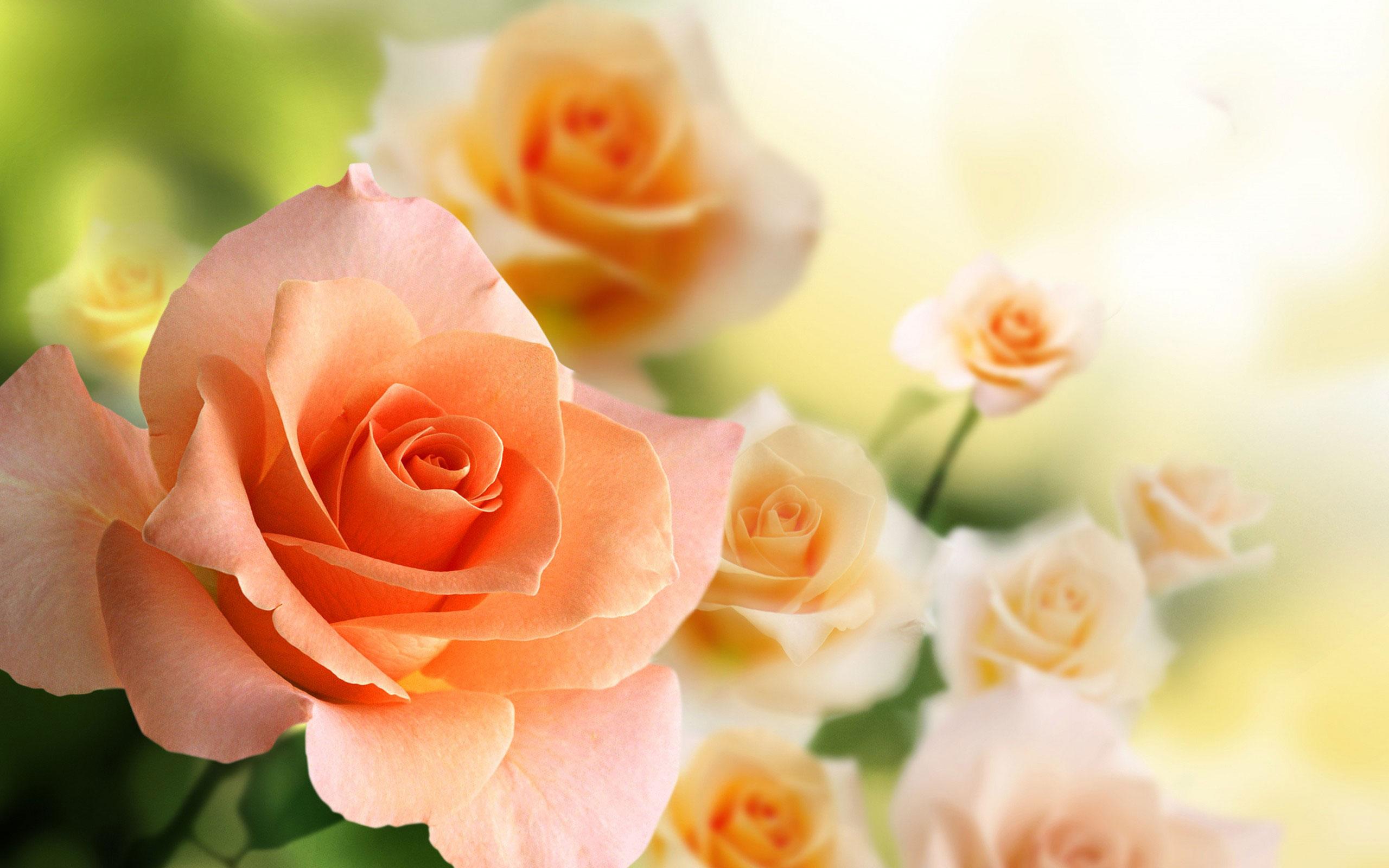 Mình sẽ update thêm những hình ảnh hoa hồng đep vào thời thời gian sớm nhất có thể :v