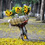 Những con đường mùa thu đẹp nhất ở Hà Nội