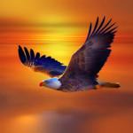 Bộ ảnh đẹp về loài đại bàng
